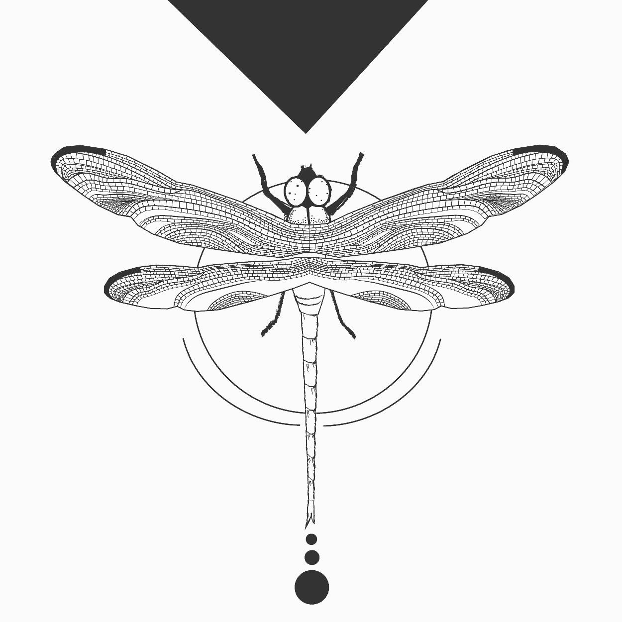 Libellen Illustration